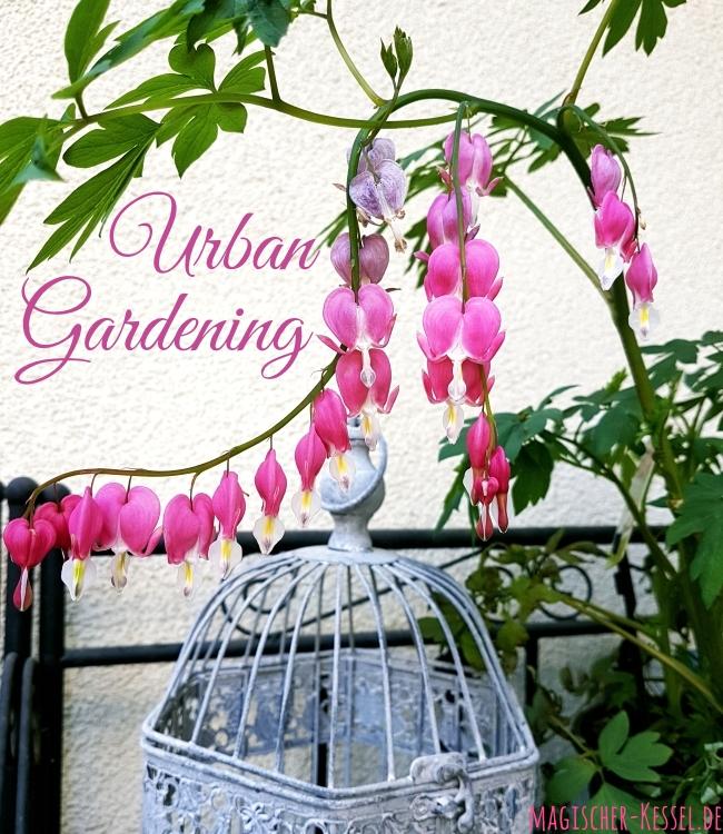 Urban Gardening in Berlin: Tränendes Herz