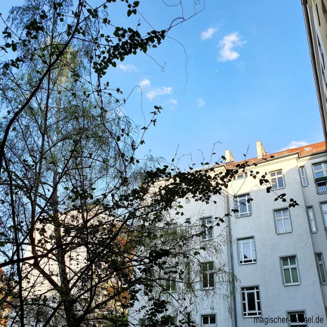 Blick in den Himmel aus einem Berliner Innenhof. Bäume, Fenster, Himmel
